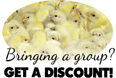 groupDiscount