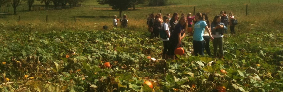 pumpkinPatch1