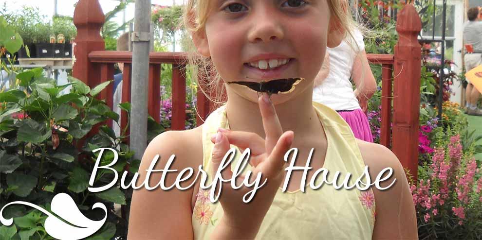 ss.ButterflyHouse