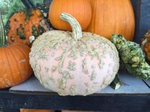 peanut-pumpkin